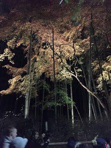 竹の小径 ライトアップ-3