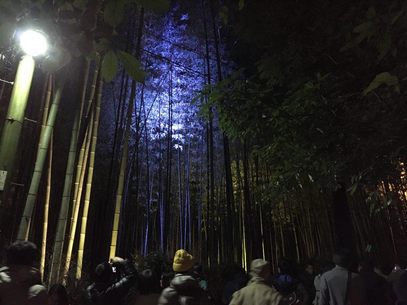 竹林の小径 ライトアップ-2