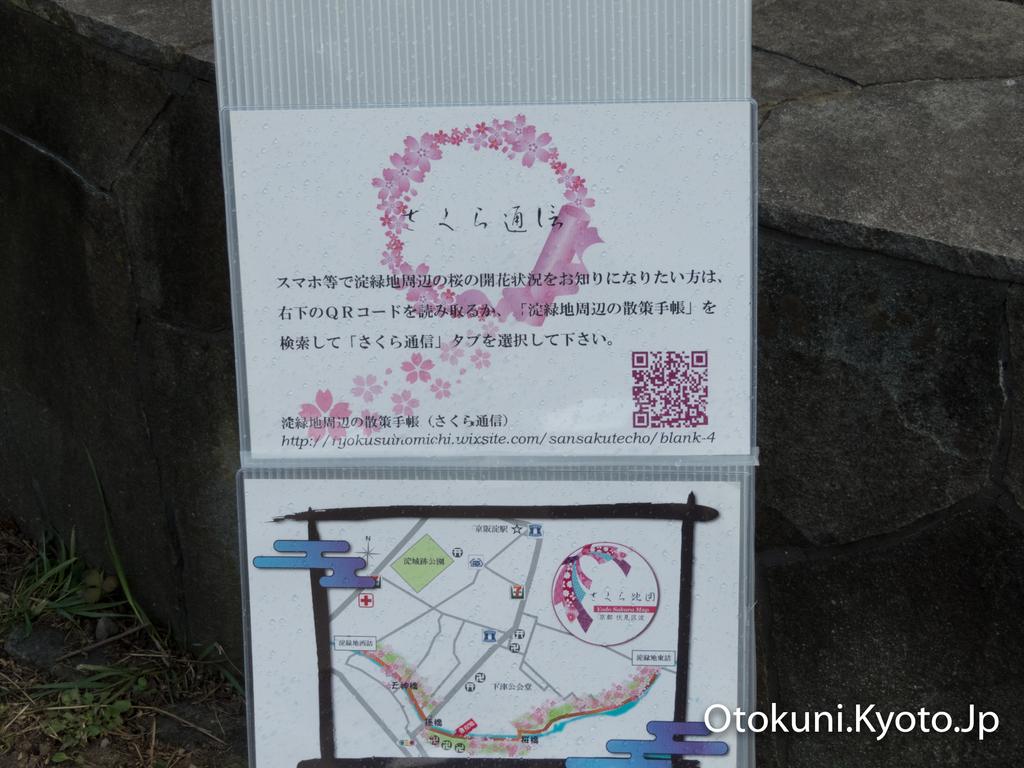 京都・淀の河津桜