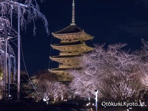 東寺 夜桜ライトアップ2017