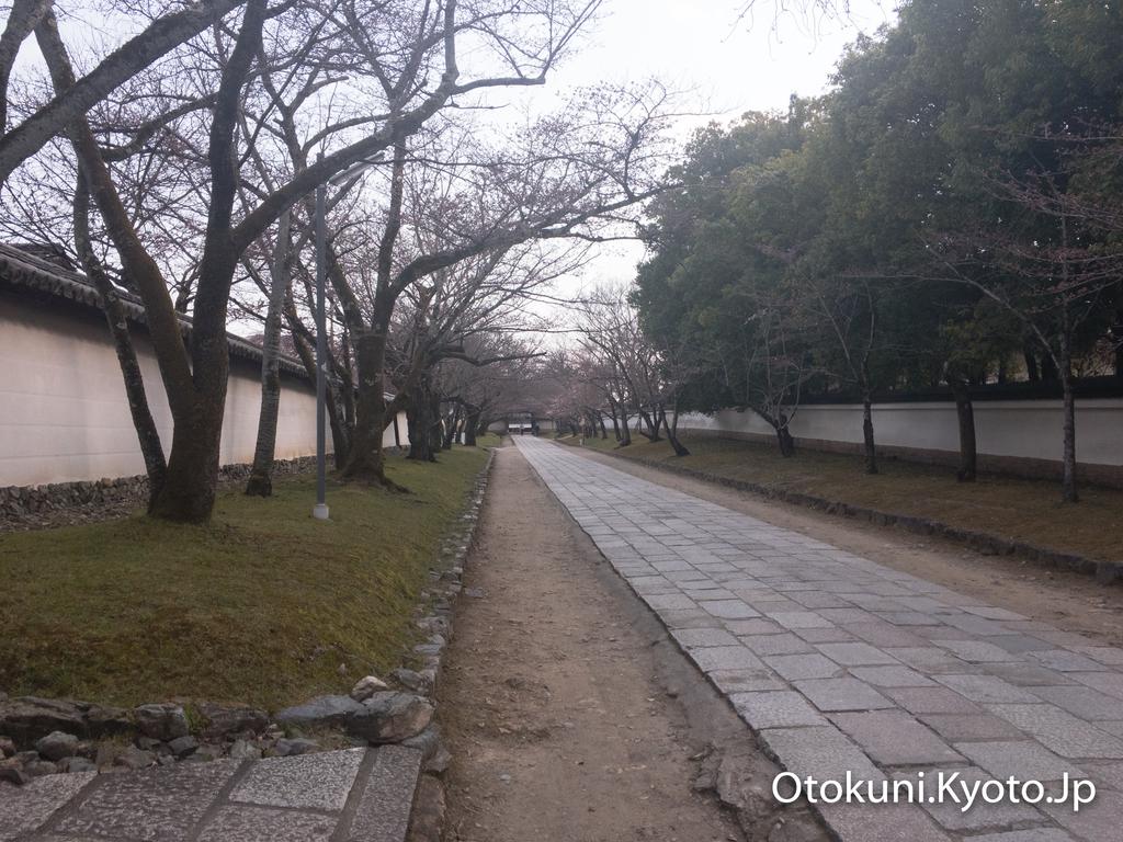 醍醐寺の桜 2017
